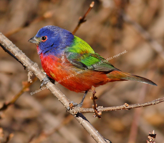 home page brenda 39 s nature photograhy including birds of virginia